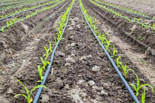 Drip Irrigation to Each Plot