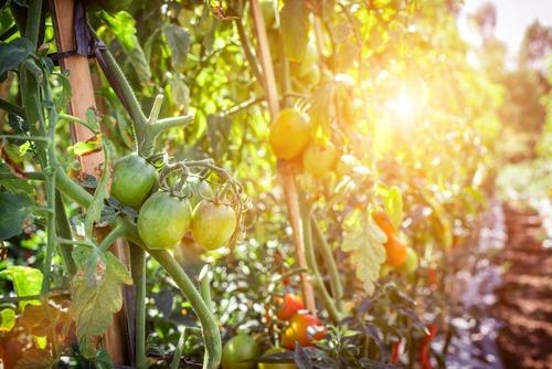 Variety of seasonal fruits & vegetables
